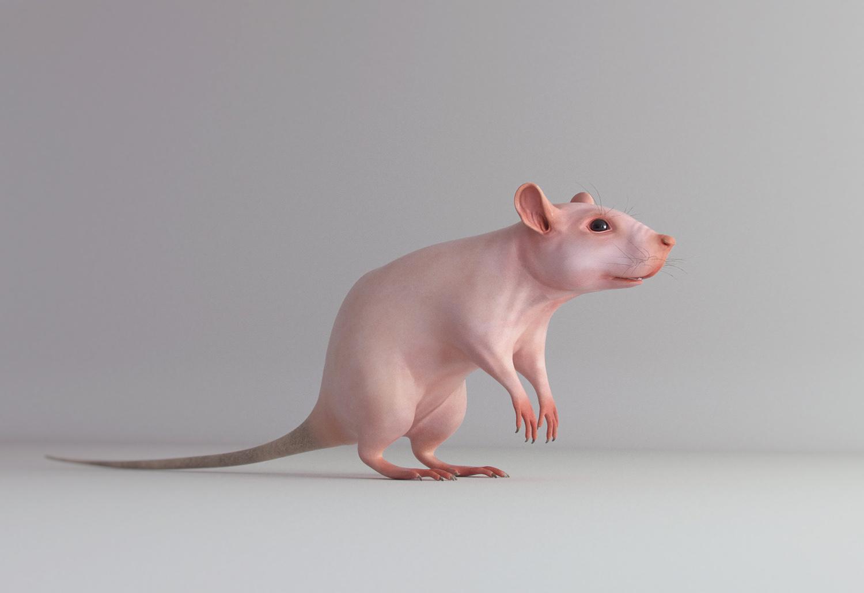 rat_complete